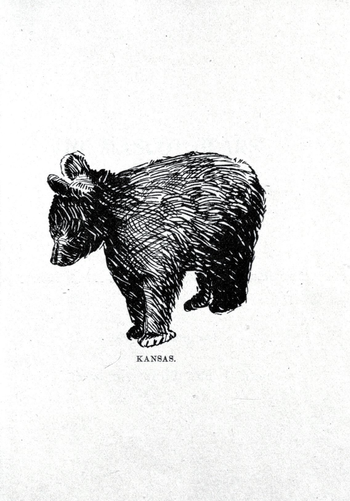 Pencil Drawings Of Grizzly Bears