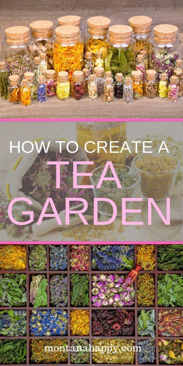 How to create a tea garden gardencreate