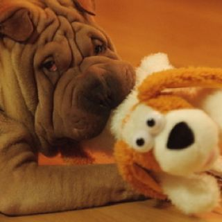 Gaho (you're most likely a VIP if you know who this is)