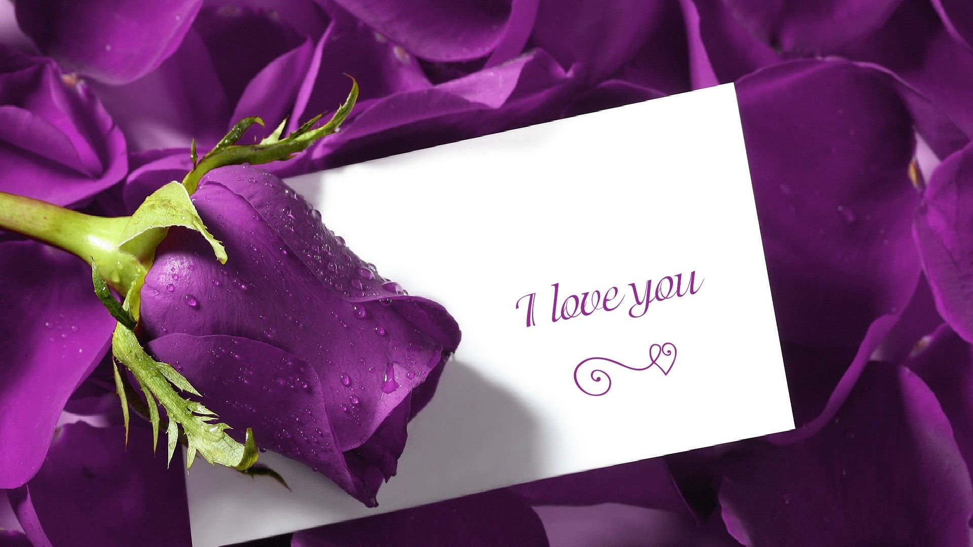 Purple Backgrounds Fb Covers Love You Quotes Flower Background Hd