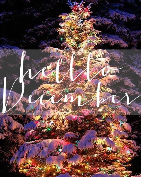 Hello December | Beautiful Snow Covered, Snowy Lit Up Christmas Tree  Outside Outdoors