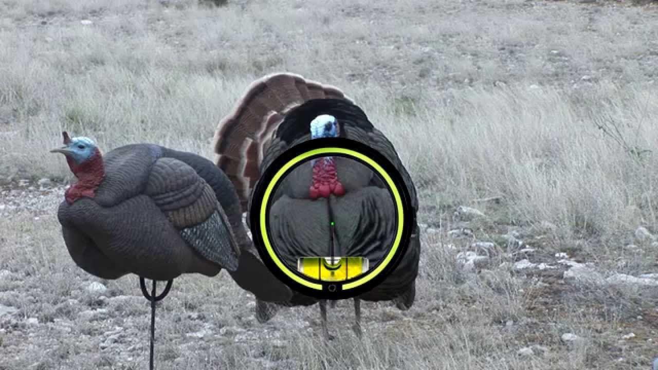 Turkey Anatomy and Proper Arrow Placement | Strut Stuff | Pinterest ...