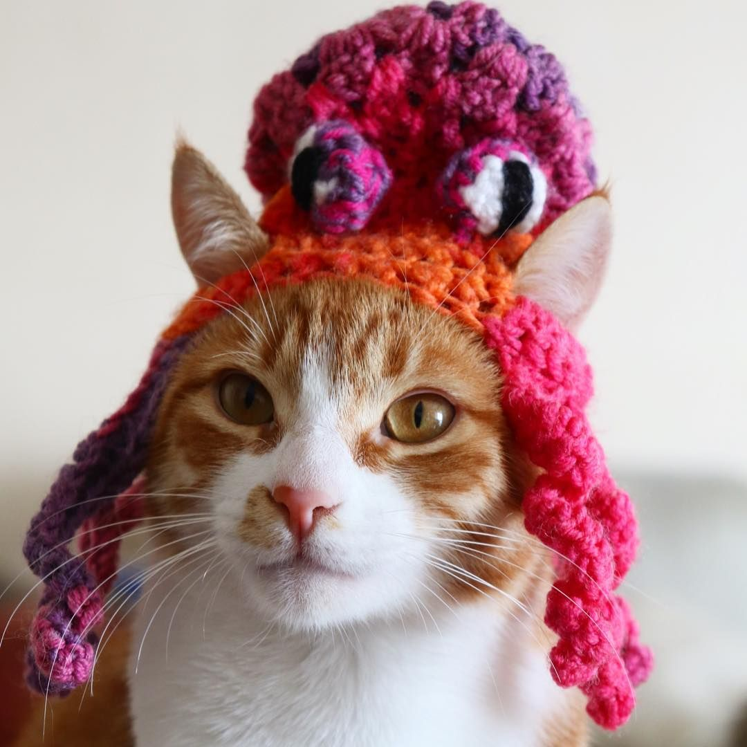 Pin by Pawsome Crochet on Cats in Hats Cat hat, Crochet