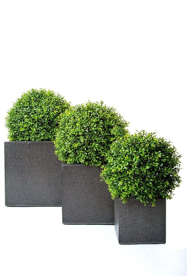 Deluxe Topiary Balls In Cube Pots | Minimalist Planters | Pinterest on