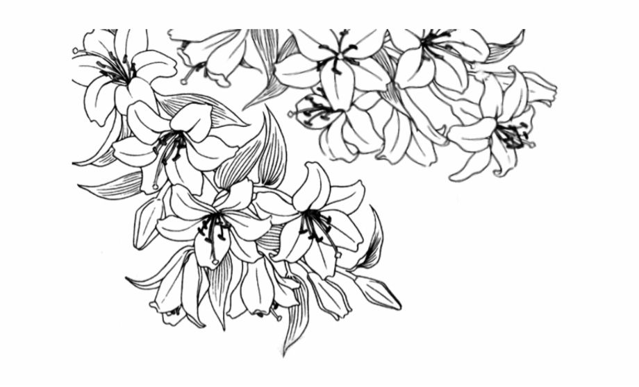 Flower Drawing Png Tumblr Flower Drawing Tumblr Flower Drawing Cute Flower Drawing