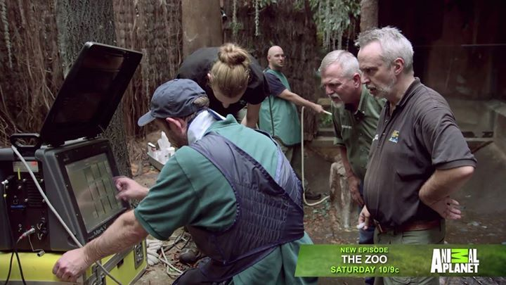 A Thomson S Gazelle Is In Dire Need Of Some Tlc From The Bronx Zoo