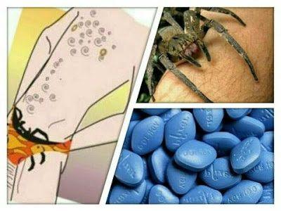 Picada de aranha provoca um estranho sintoma em homens. Descubra qual: ift.tt/2a8oKUK