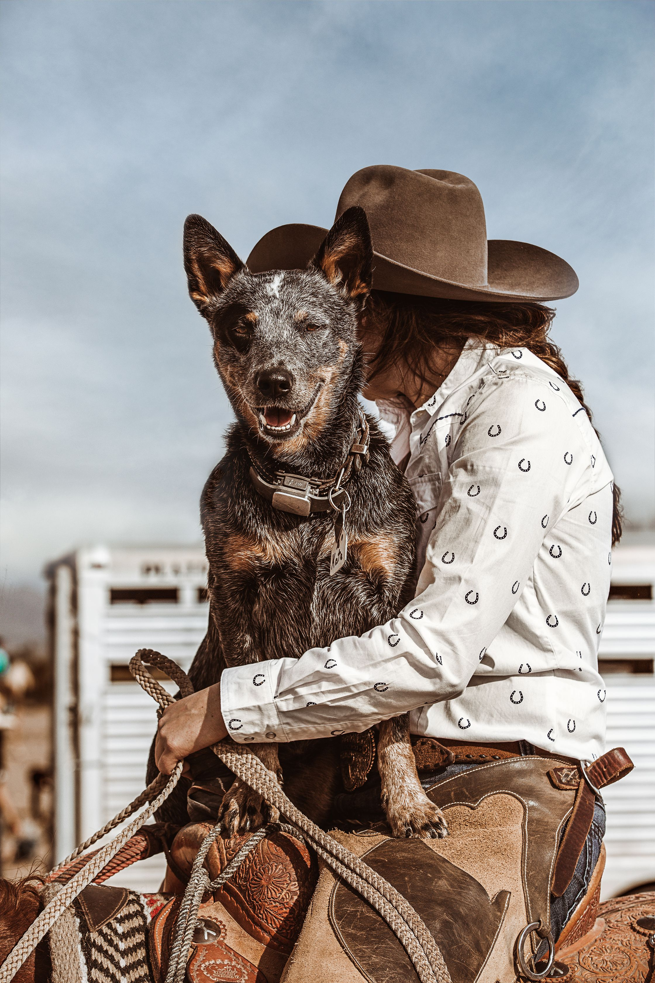 Pin by Boot Barn on The New Mexico Edit   Aussie cattle ...