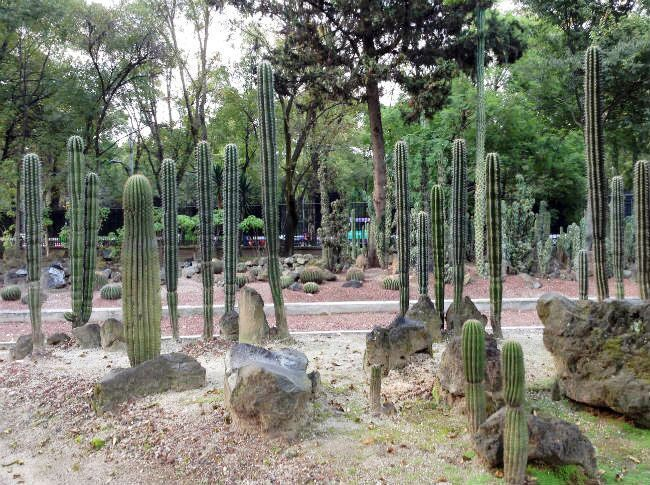 Chapultepec Botanical Gardens Mexico City