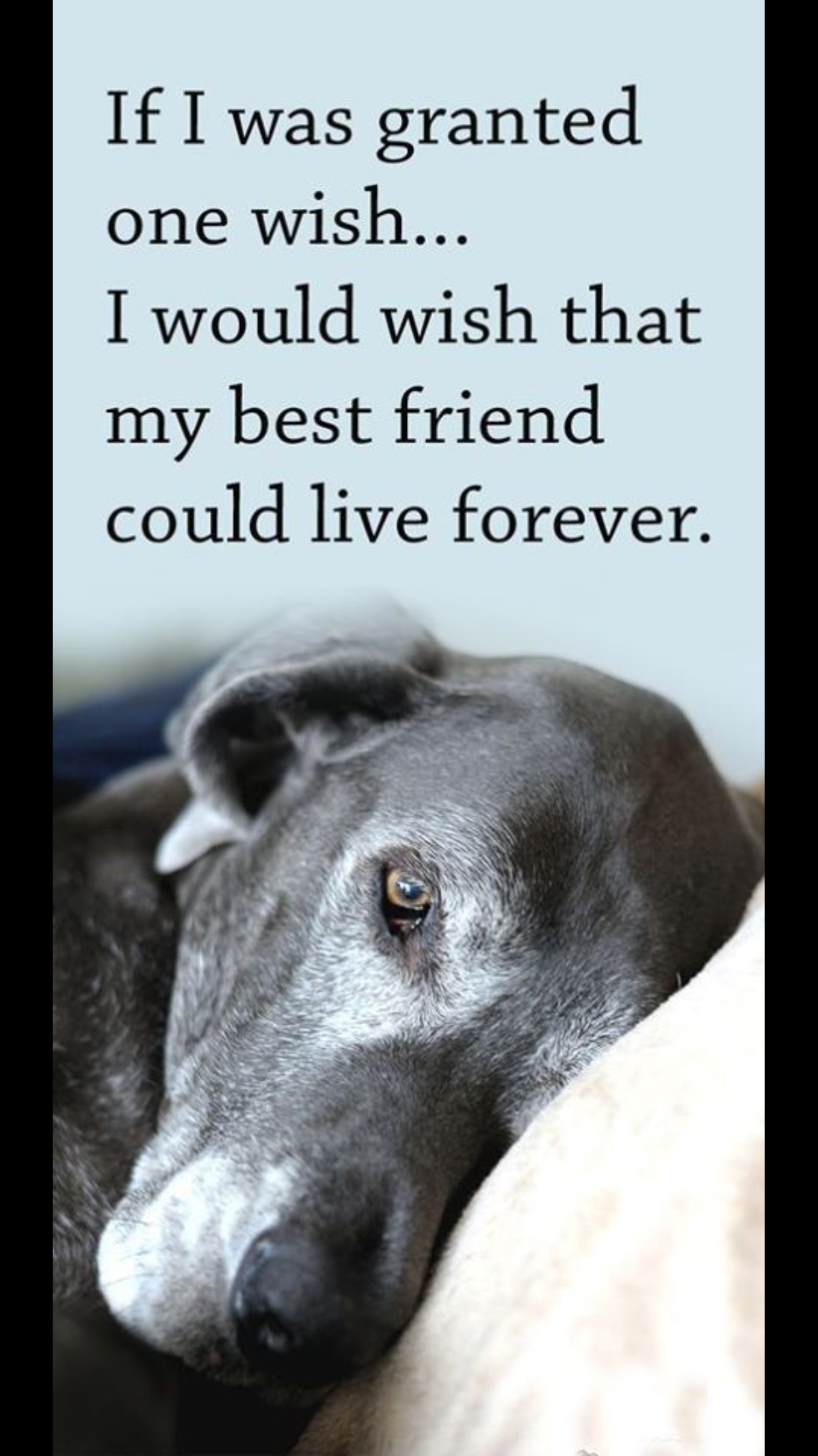 Dog Loss Quotes Pinaimilia Bratsolia On Pets  Pinterest  Dog Pet Loss And