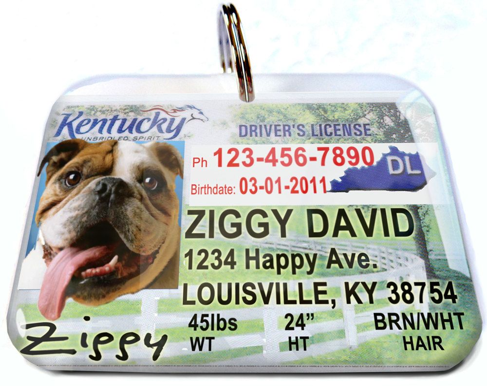 Kentucky driver license Personalized Custom ID by