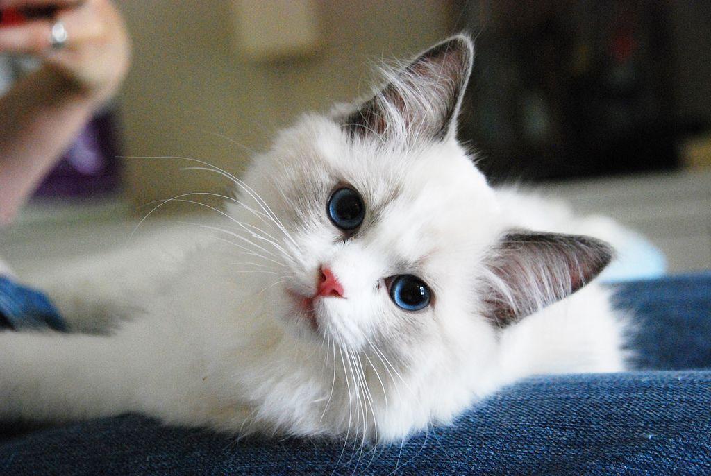 ป กพ นในบอร ด Feline Fascets