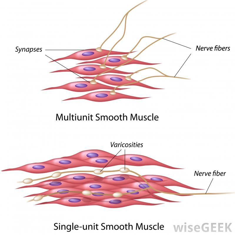Muscle Cells Google Search Branding Pinterest Muscular