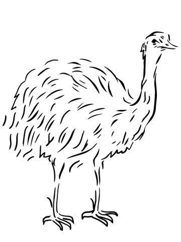 Emu, ein flugunfähiger Vogel Ausmalbild | Vorlagen: Tiere ...
