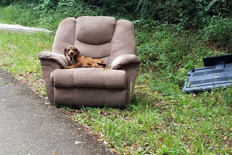 Puppy Nearly Starves Waiting For Owner After He Was Discarded On Side Of Road With Recliner And Tv People Pet Beds Pet People Pets