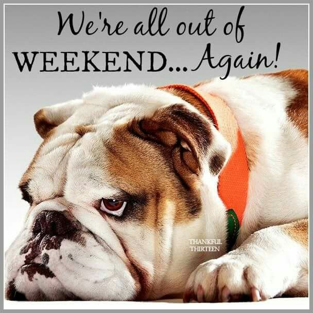 Weekends gone dog Cards Quotes Weekend quotes, Dogs
