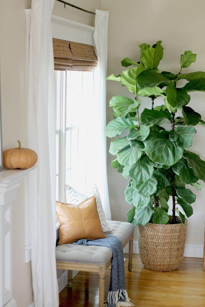 Modern Farmhouse Fall Family Room Apartment Plants 400 x 300