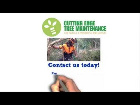 Tree Removal Newcastle Lake Macquarie Maitland Cessnock And Central Coas With Images How To Remove Newcastle Cessnock