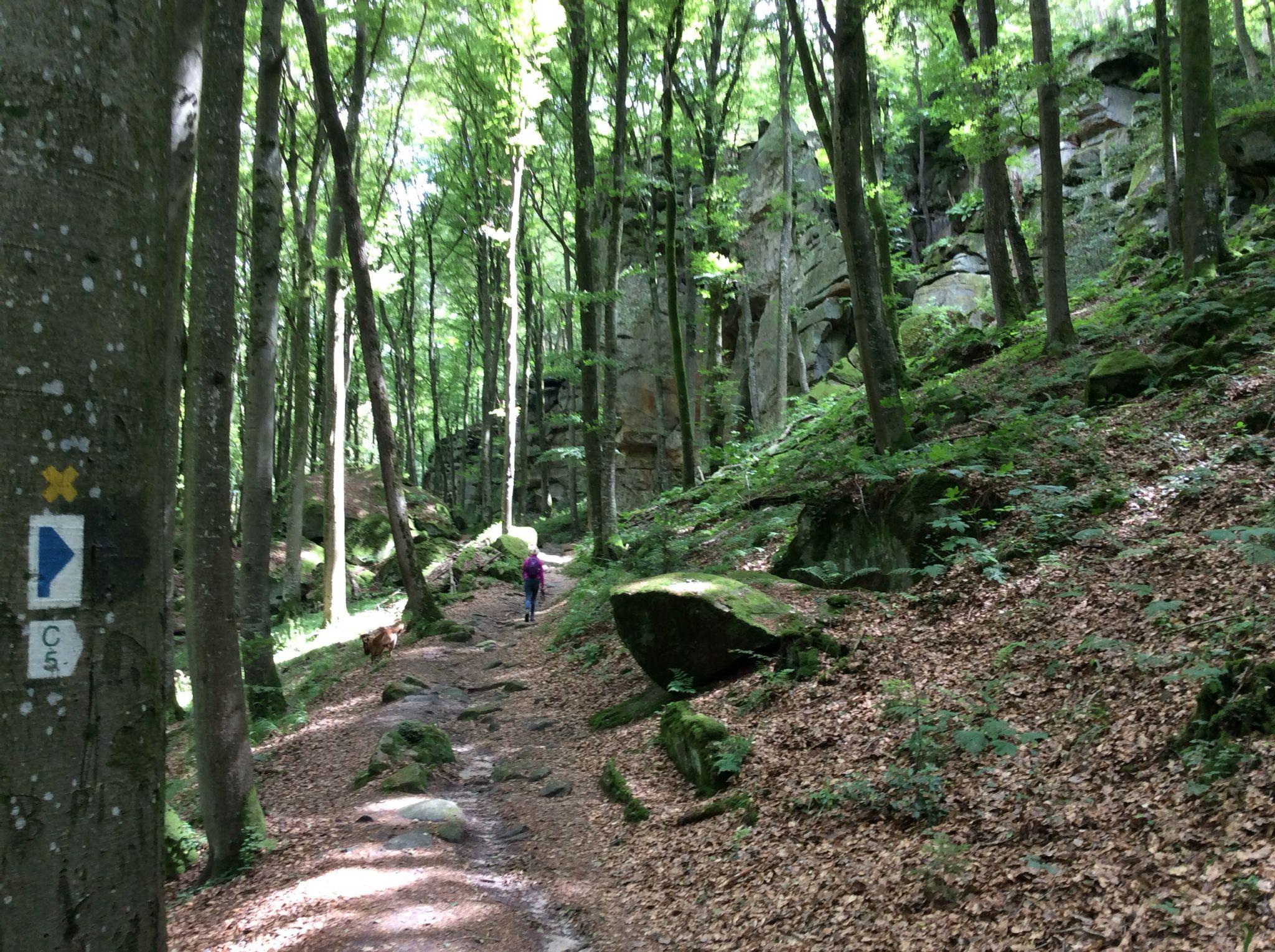Fresh air oxygen  earth nature rocks green  feel free