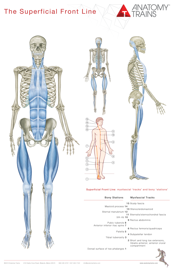 3rd Edition Posters - Redesigned Set of 8 | Anatomía, Fisioterapia y ...
