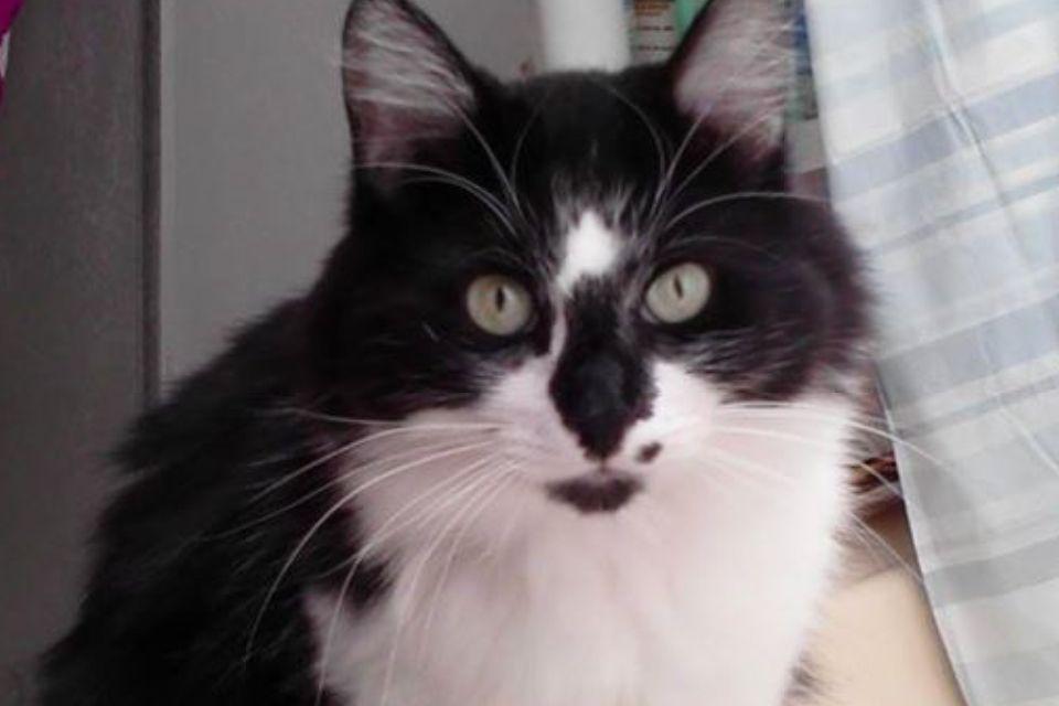 My little dude, Oreo. RIP buddy.