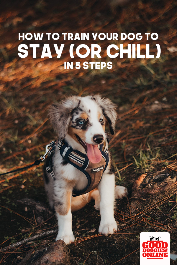How To Train Your Dog To Stay Teach A Dog To Stay Good Doggies Online Training Your Dog Dog Training Good Doggies Online