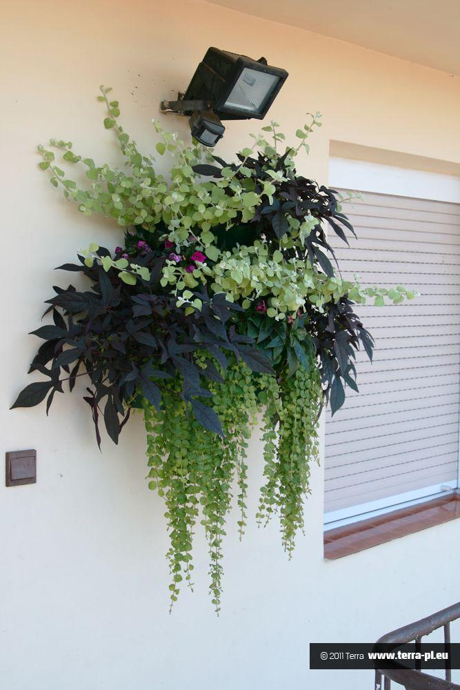 Kompozycje Kwiatowe Na Balkon I Taras Flower Garden Plants House Plants