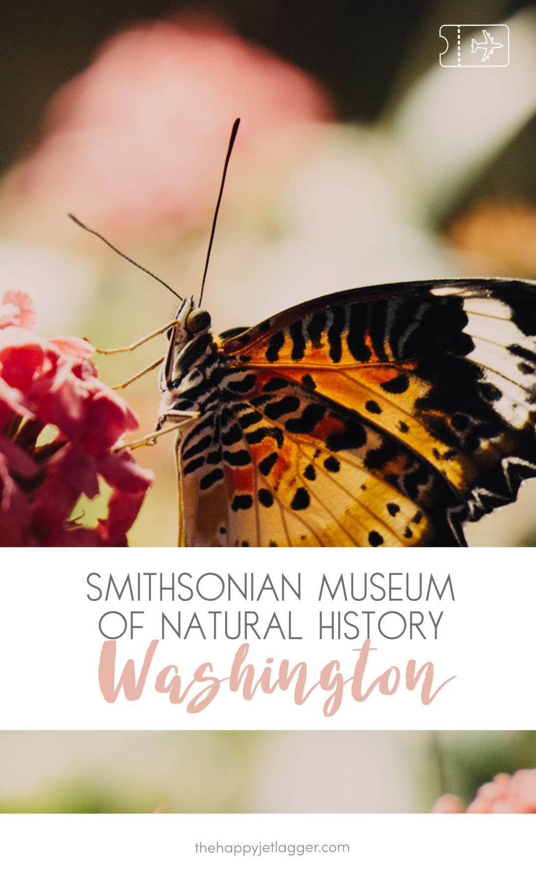 Visting The Mall And The Butterfly Garden In The Smithsonian National  Museum Of Natural History In