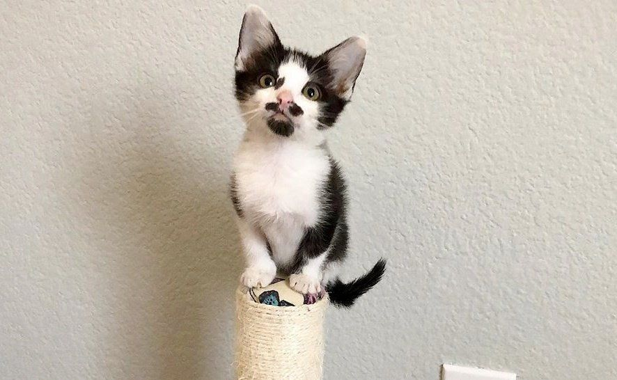 A Tuxedo Kitten Who Was Found Abandoned Outside Bonded With A