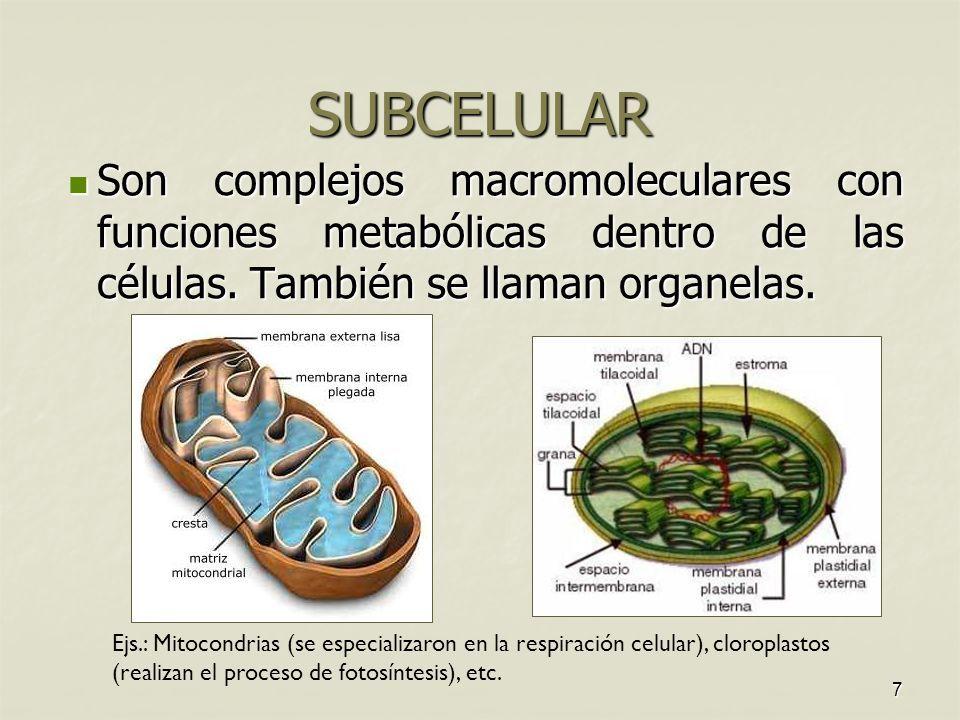 Nivel Subcelular De Los Seres Vivos Buscar Con Google Seres Vivos Eres Mia Respiracion Celular