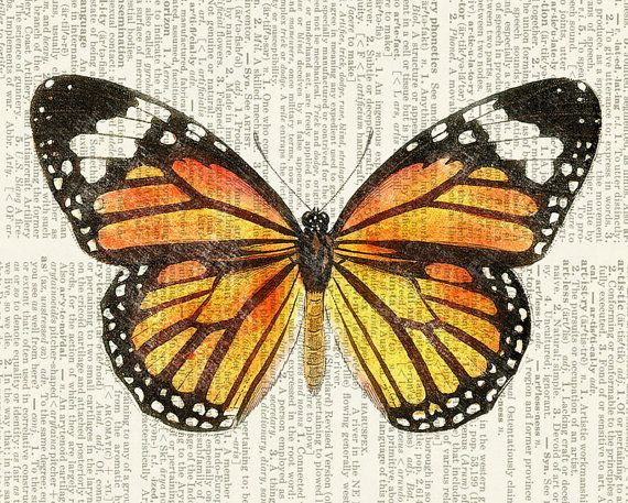 Monarch butterfly print Butterfly artwork, Vintage