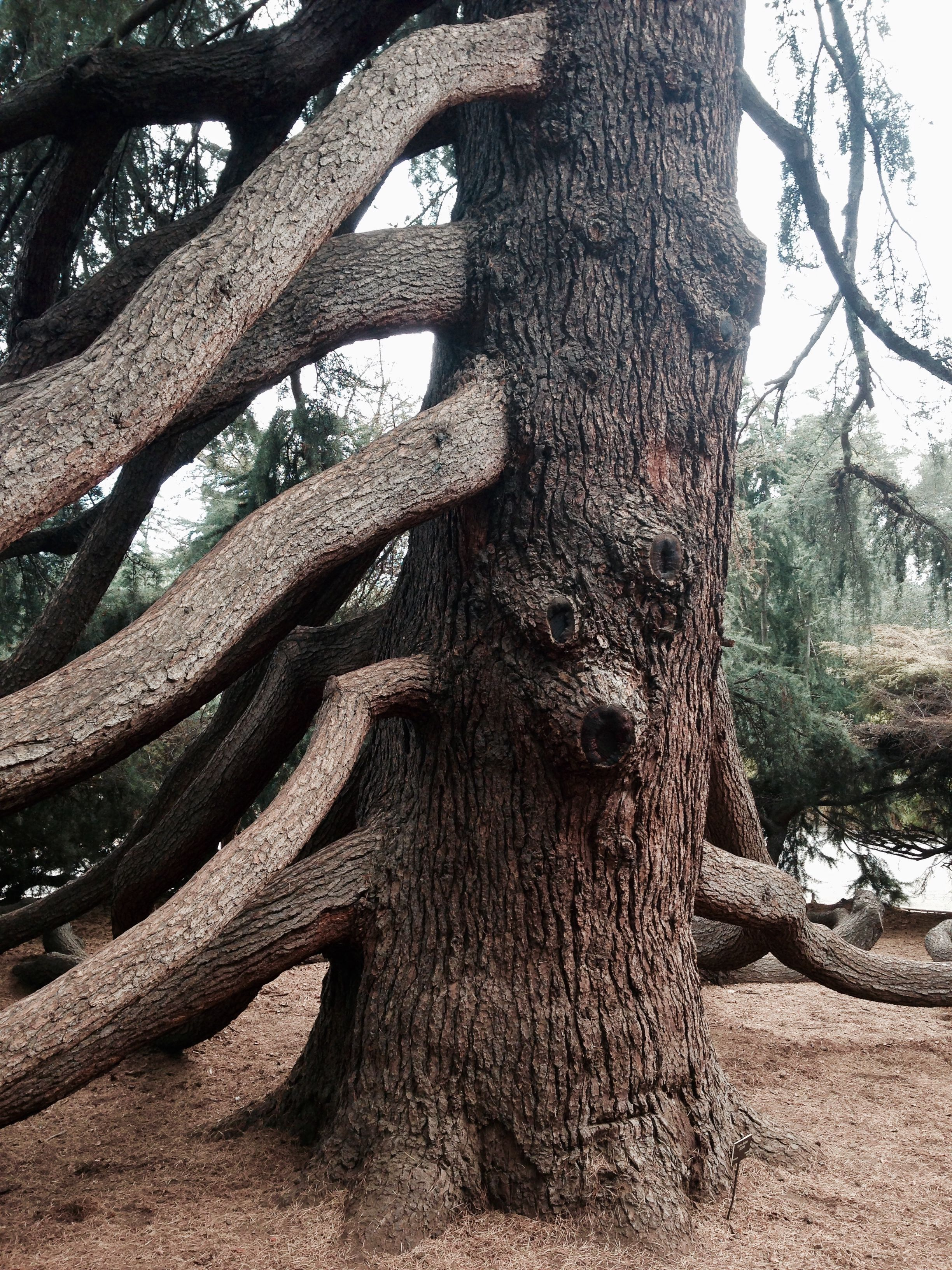 Pin By Wolf70 On Bomen Weird Trees Ancient Tree Nature Tree