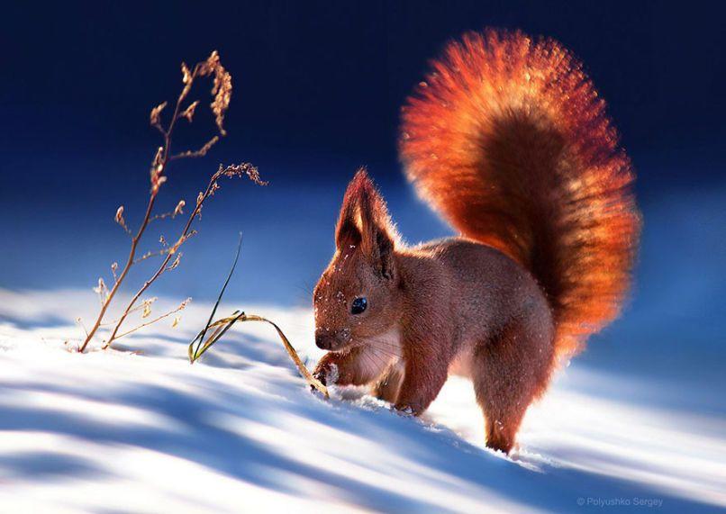 Ukrainian Photographer Sergey Polyushko Shoots Captivating Animal Portraits Animals Animals Beautiful Cute Animals