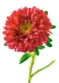 Aster Flower Meaning Symbolism Teleflora Com Birth Month Flowers Birth Flowers September Flowers