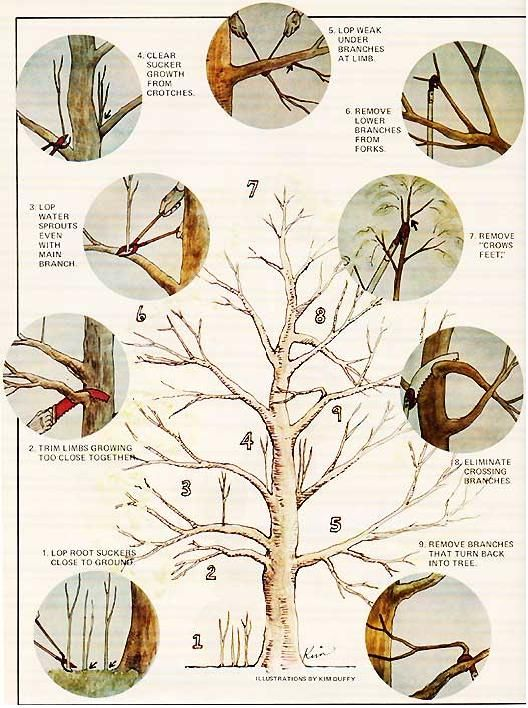 Básico bonsai
