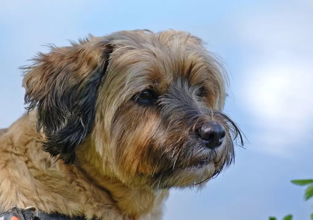 30 beloved dog breeds that dont shed (With images) | Rare