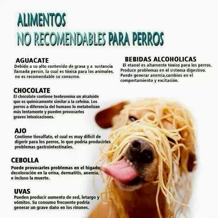 Alimentos no recomendables para perros animales y mascotas pinterest alimentos mascotas y - Alimentos recomendados para perros ...