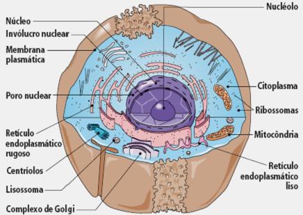Celula Animal Con Sus Partes Buscar Con Google Biology Science Human Anatomy