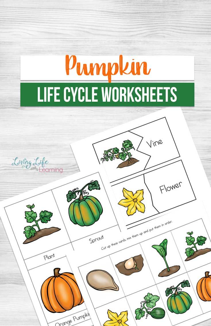 Pumpkin Life Cycle Worksheets Pumpkin life cycle, Life