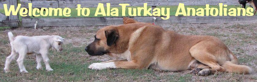 anatolian shepherd puppies - Google Search