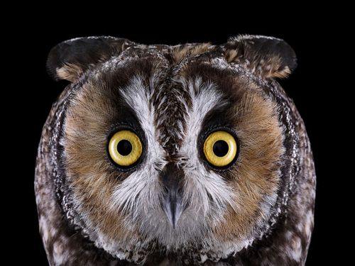 My Owl Barn: Brad Wilson: Affinity