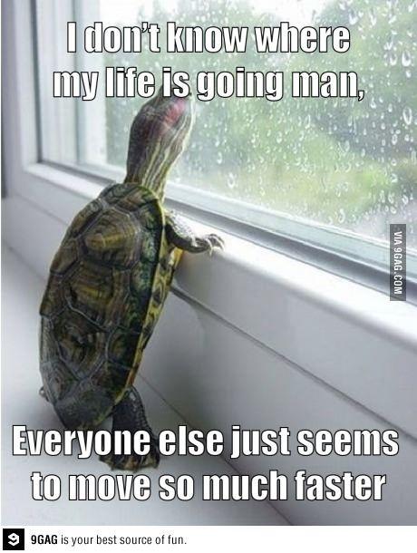 depressed turtle