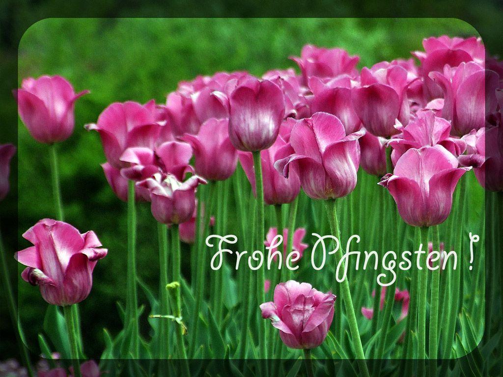 schöne pfingsten sprüche Pfingsten   Kostenloses Hintergrundbild | Ostern und Pfingsten schöne pfingsten sprüche
