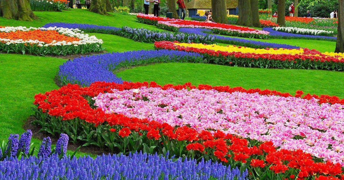 Wallpaper Pemandangan Bunga Sakura Taman Indah Bunga Tulip Pemandangan