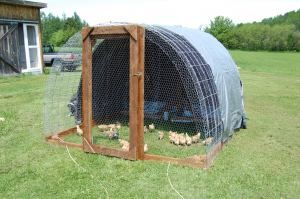 One of 2 Coops we built in 2011