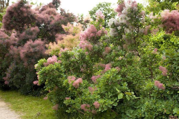 Farbenfroher Sichtschutz: Blütenhecken anlegen und pflegen,  #anlegen #Blütenhecken #Farbenfr... #sichtschutzpflanzen