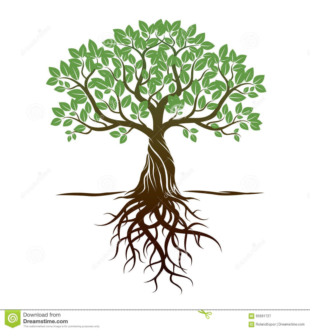 Color tree roots vector illustration graphic element for Arboles de hoja perenne con pocas raices