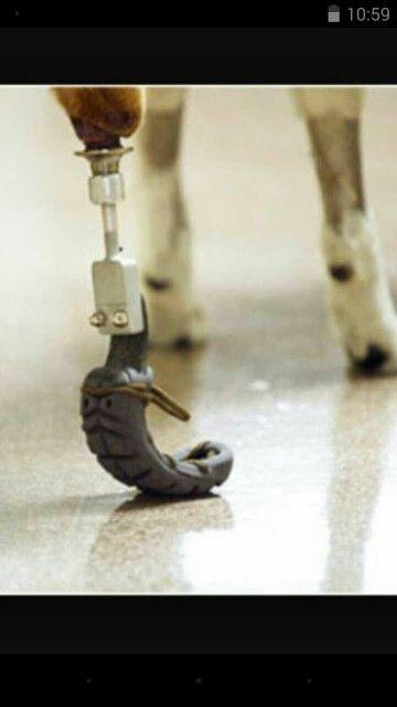 Prótesis para perro