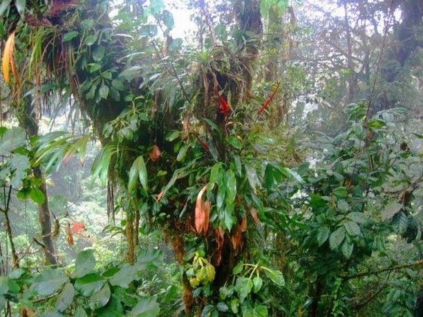 Rainforest Costa Rica  #rainforestcostarica #monteverde #monteverdenationalpark #openmyworld #goplayoutside #wildernessculture #letsgosomewhere #ourplanetdaily #wildlifeplanet #keepitwild #stayandwander #exploremore #bestvacations #natgeo #villathogatours