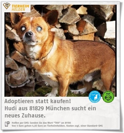 Pin Auf Tiere Aus Dem Tierheim